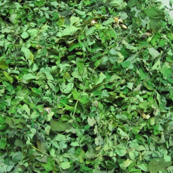 Drumstick Leaves (Dried)